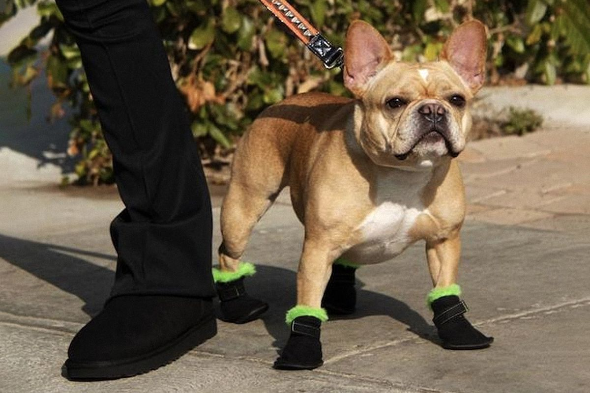 Here's Everything You Need to Get the Dog Walk Drip