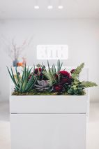 Plantshed X Kith Valentine S Day Pop Up Get The Details Here