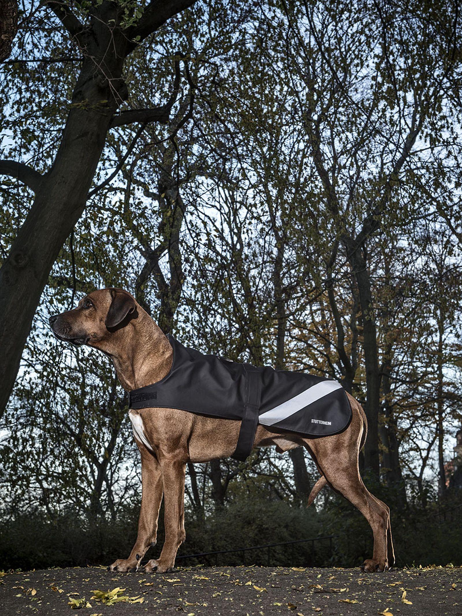 Stutterheim dog raincoats
