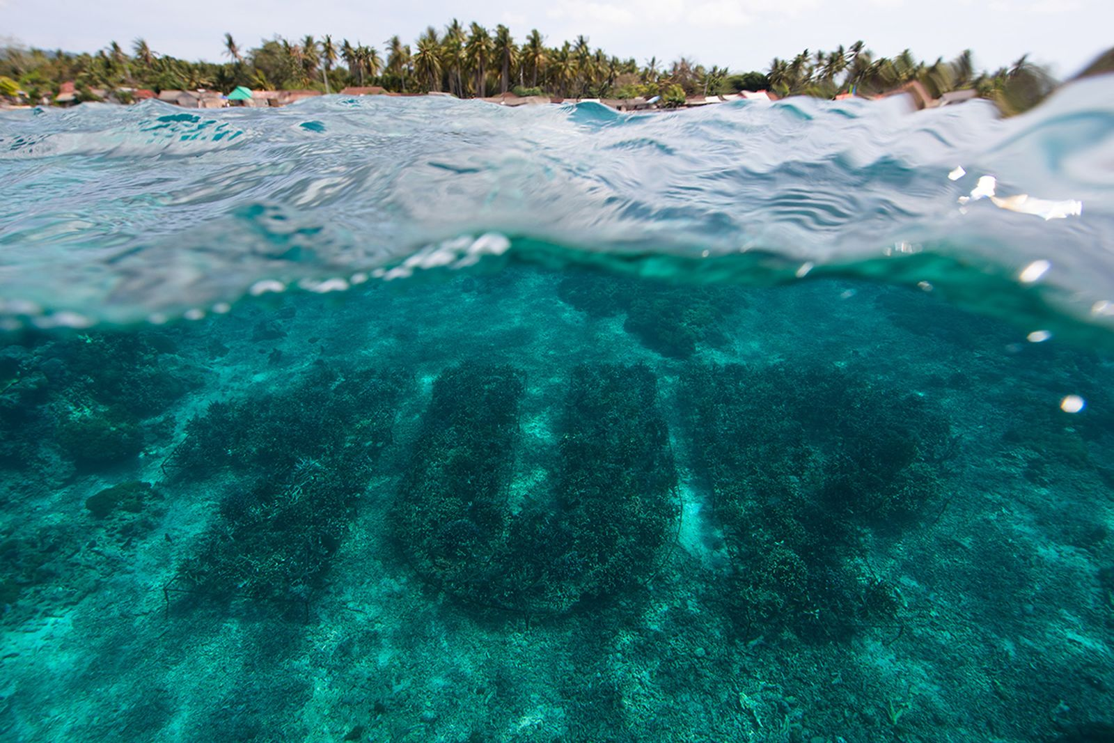 1up grafitti coral art