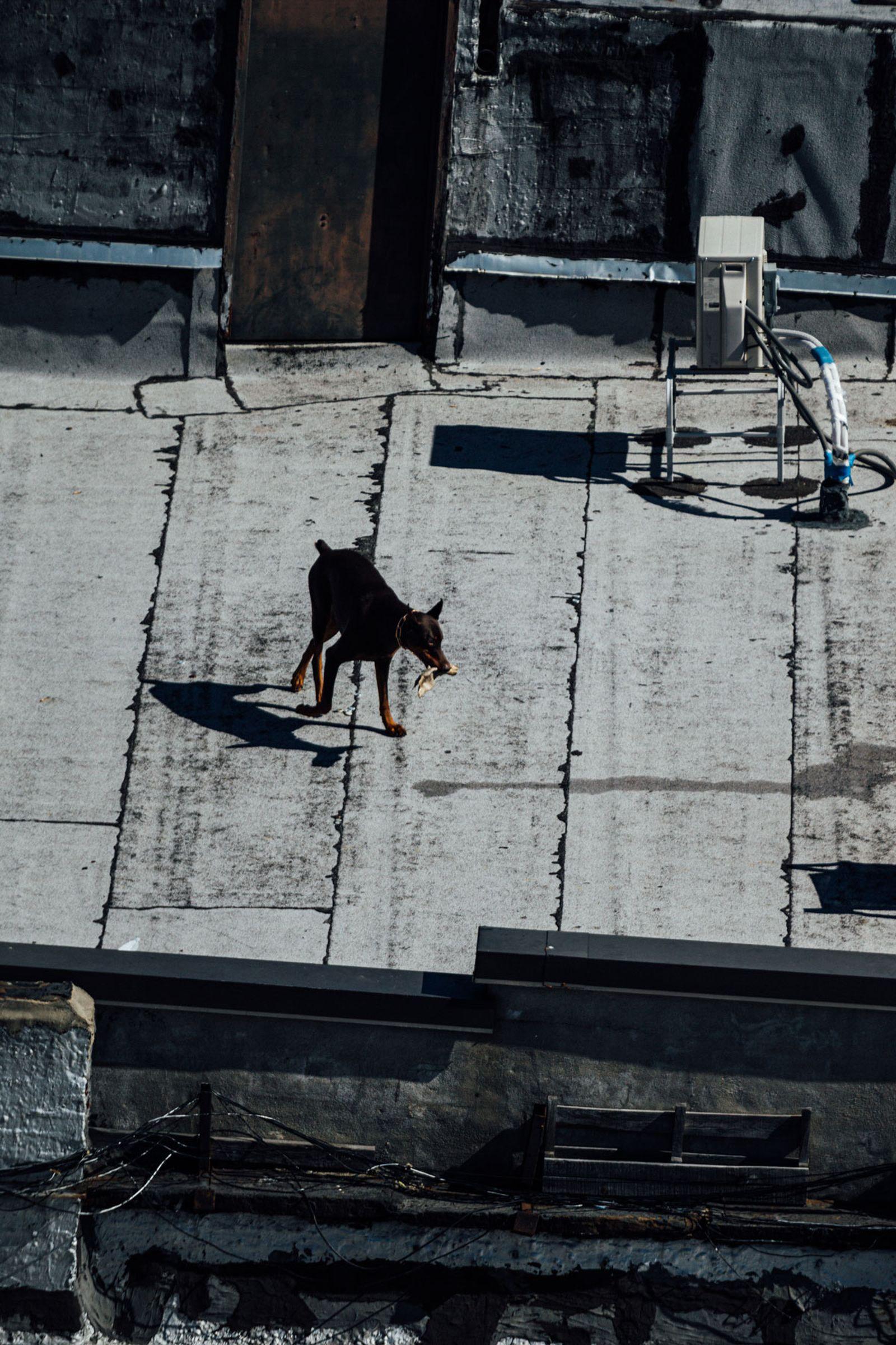 citizens-new-york-city-quarantine-seen-06