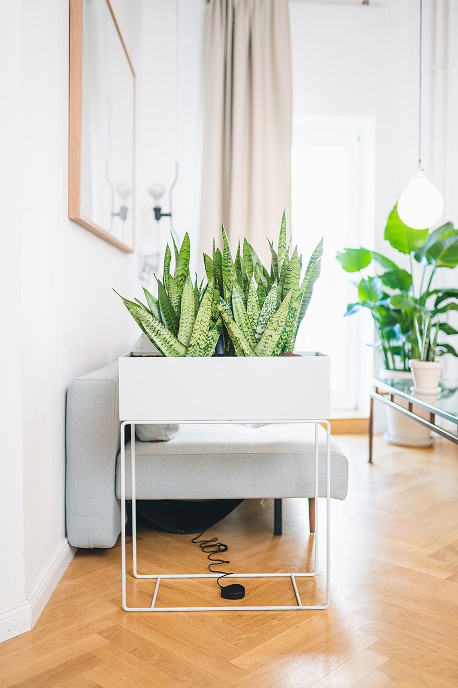 easy-house-plants-for-beginners-11