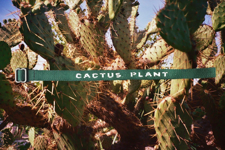 Cactus Plant Identification Tag Bracelet