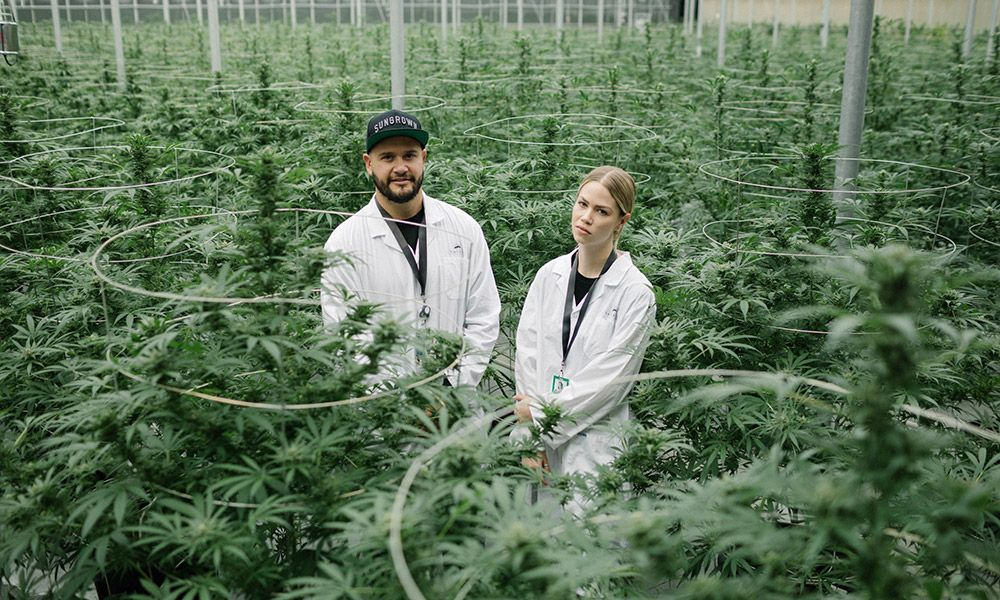 Tantalus Labs Is the Marijuana Producer Turning Weed Into Wine