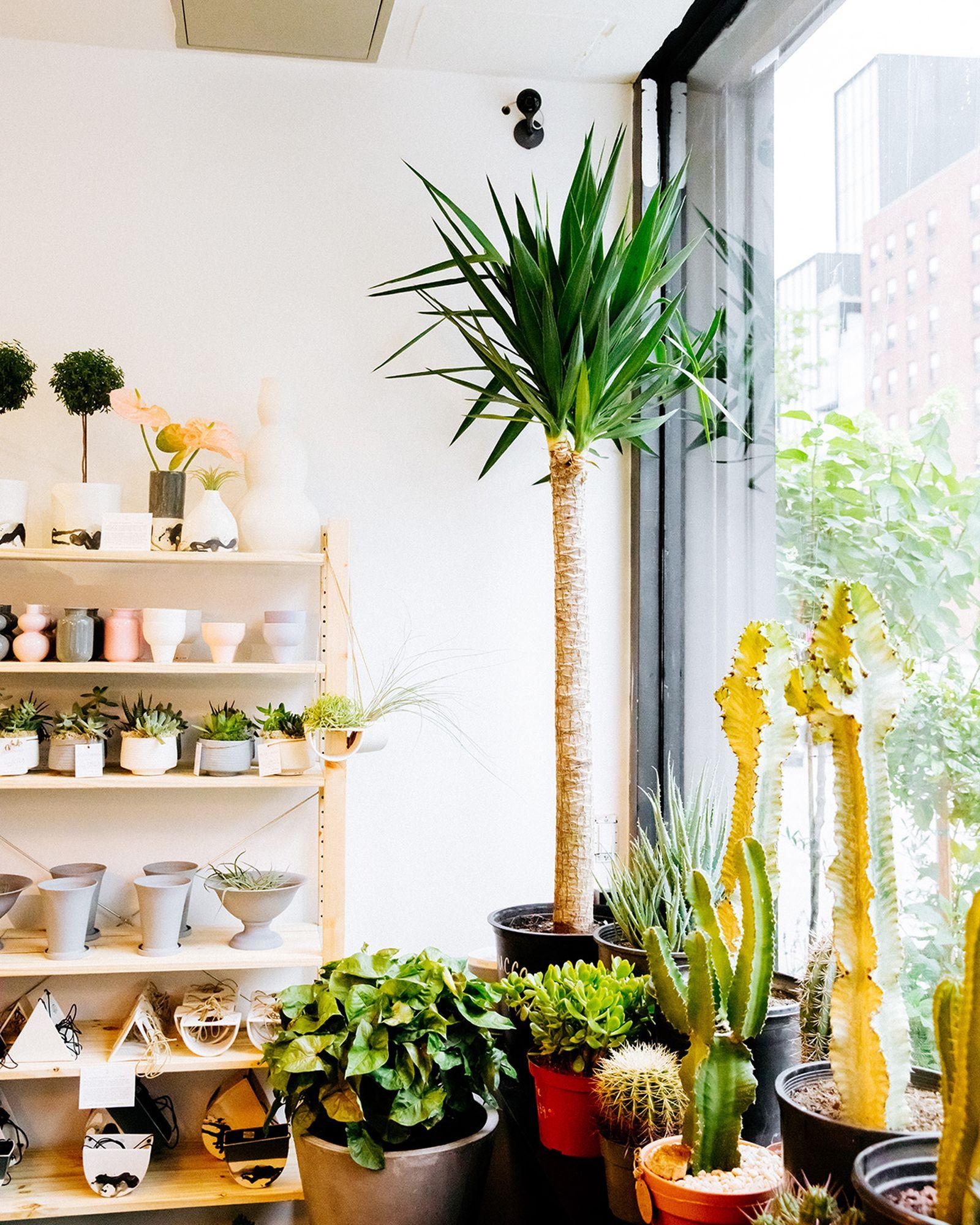 Plant Shed New York Highsnobiety PlantShed