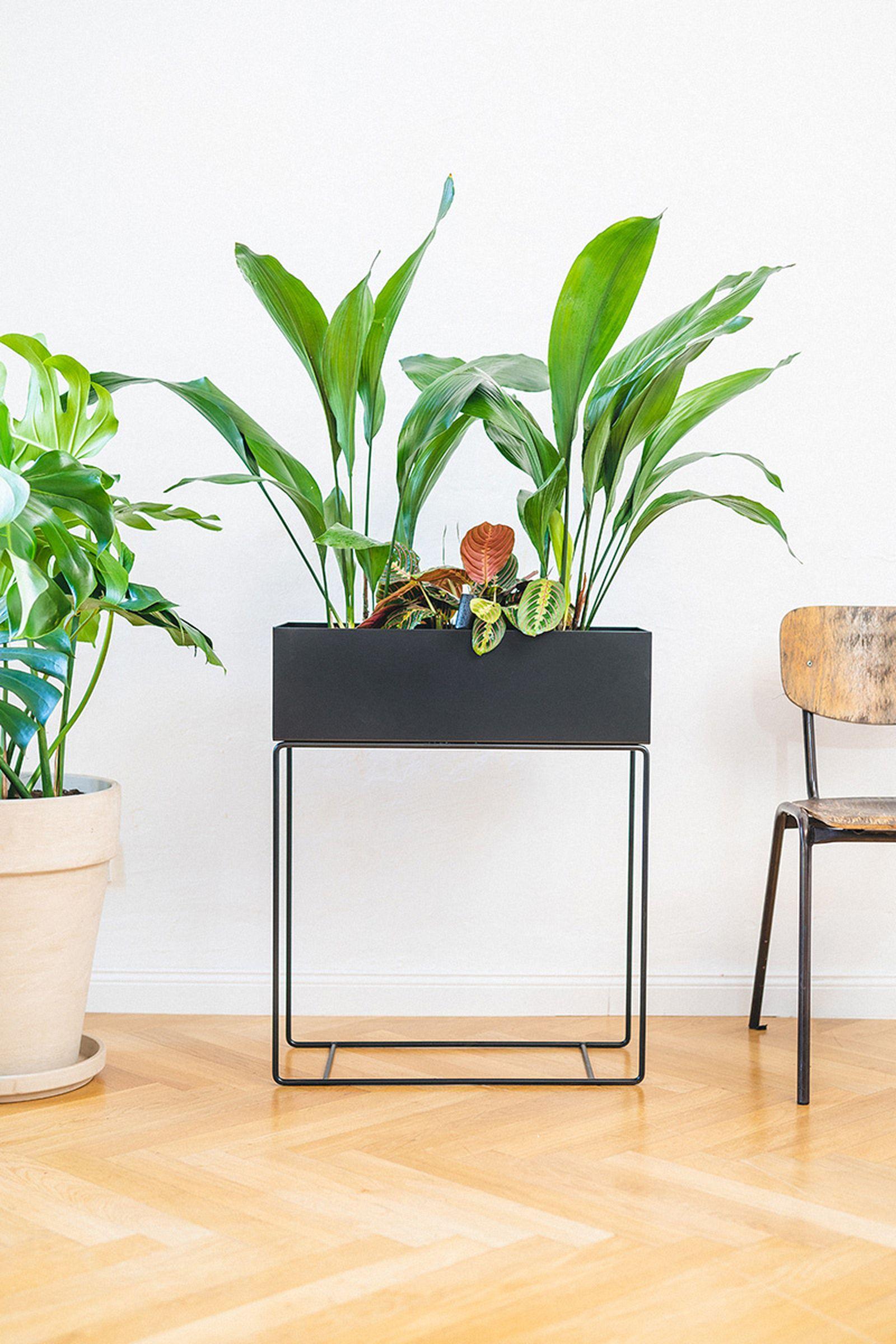 easy-house-plants-for-beginners-13