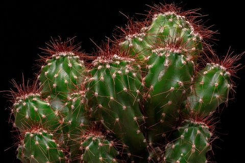 why its cool podcast cacti episode main cactus