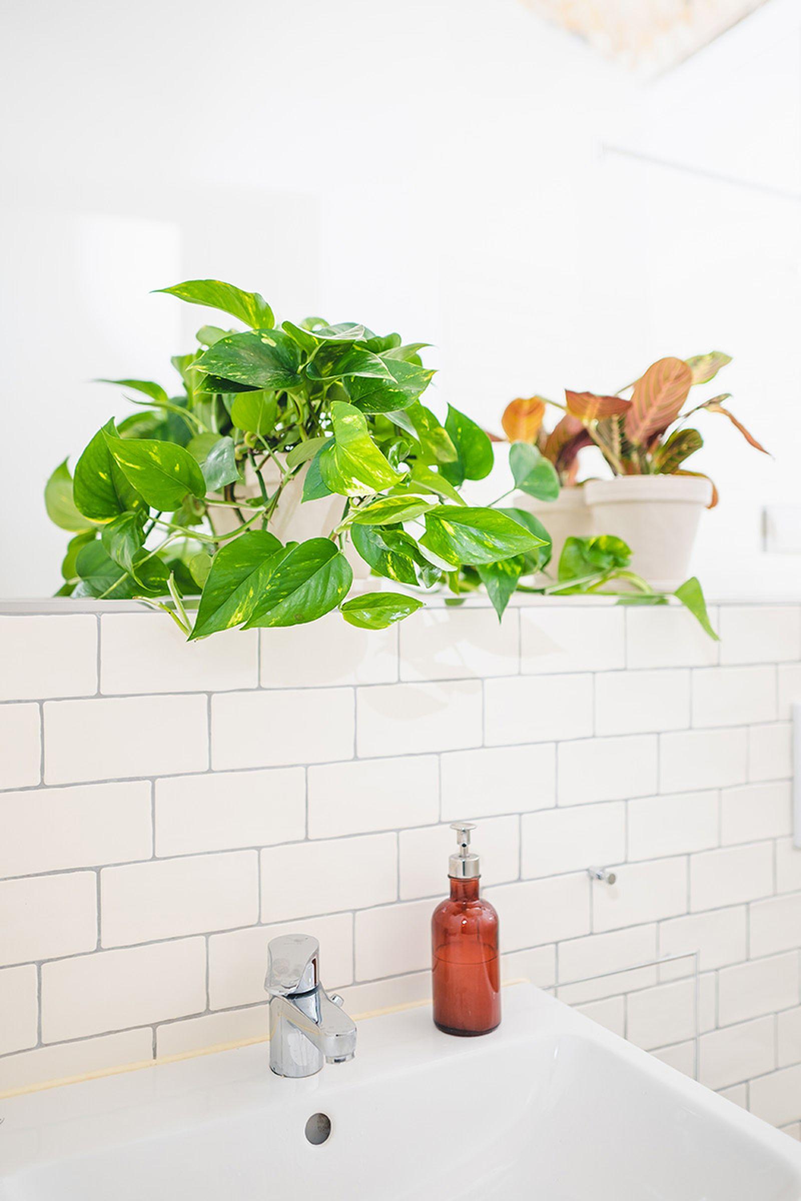 easy-house-plants-for-beginners-02
