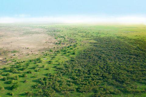timberland to plant 5 million trees Ariana Grande Bad Boys for Life Nike