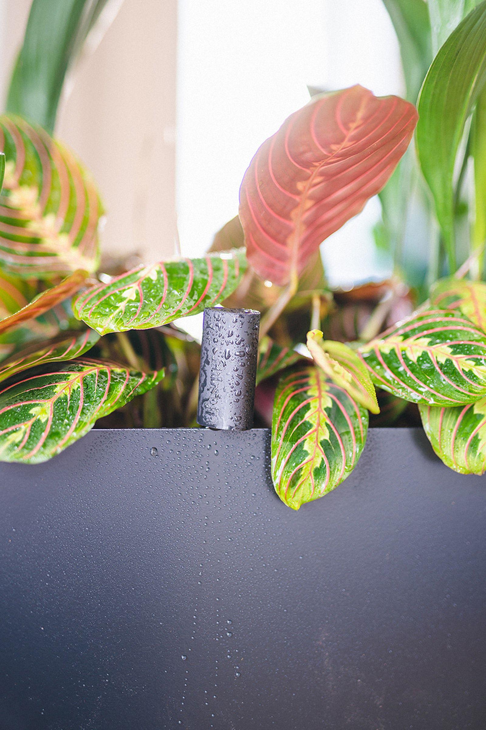 easy-house-plants-for-beginners-18