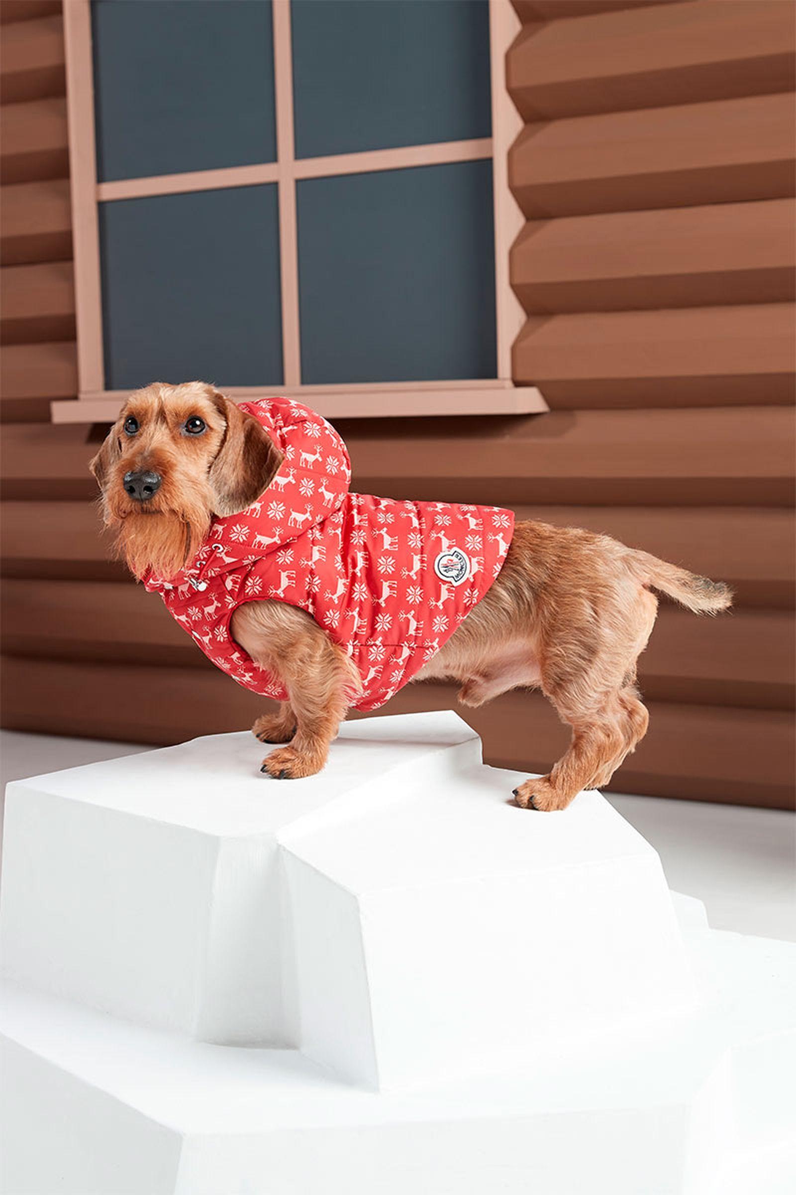 moncler-genius-poldo-dog-couture-3