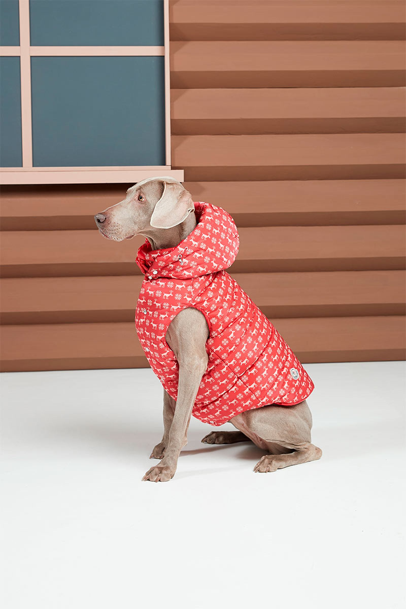 moncler-genius-poldo-dog-couture-5