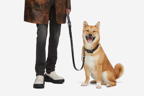 Dog Collar & Leash Set