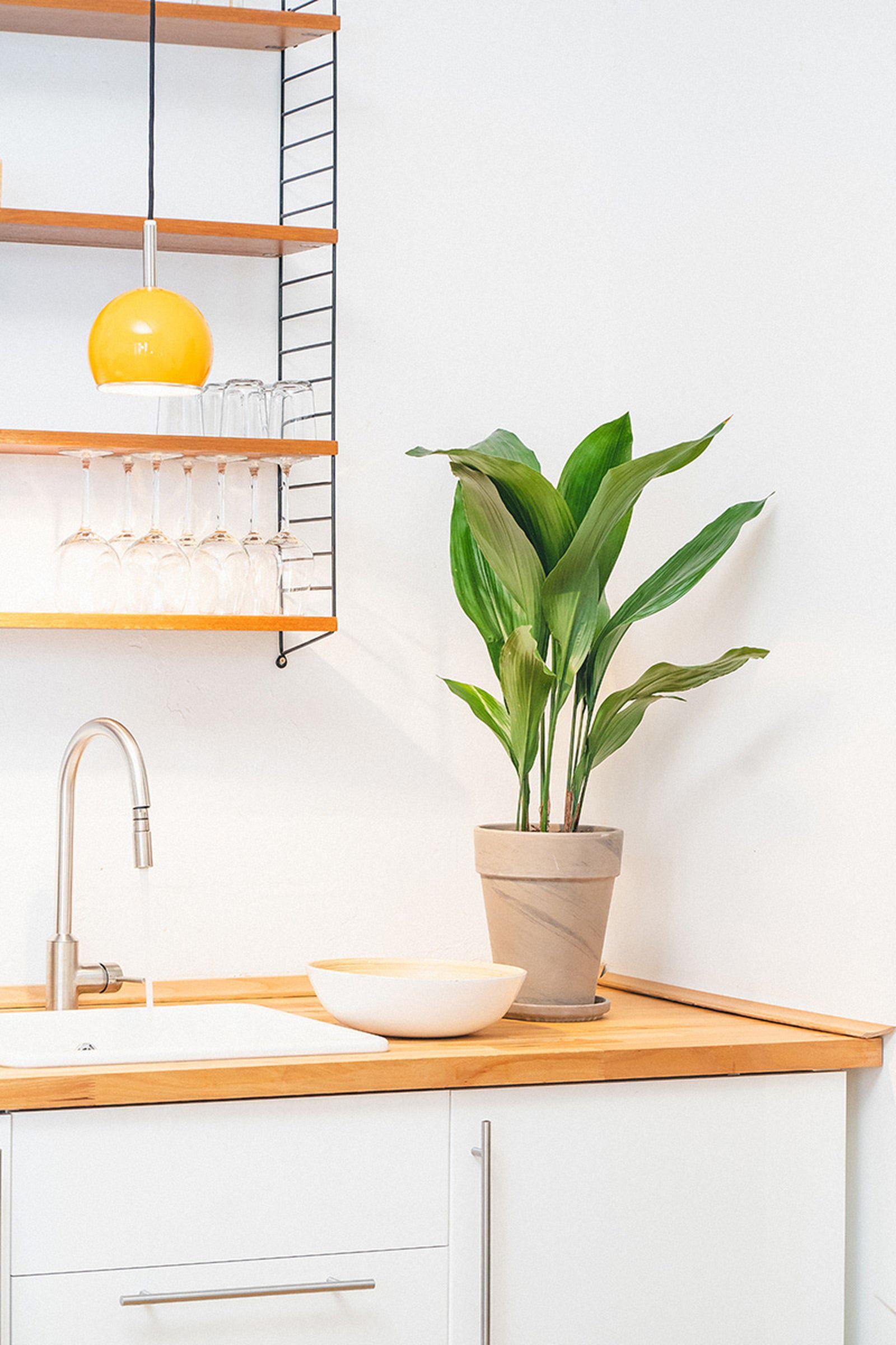 easy-house-plants-for-beginners-14