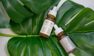 Bloom Farms Launches a Refreshing Collection of CBD Tinctures