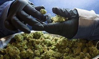 Corona's Parent Company Invests $4 Billion Into Cannabis
