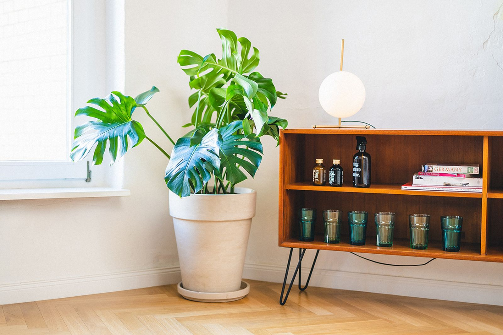 easy-house-plants-for-beginners-19