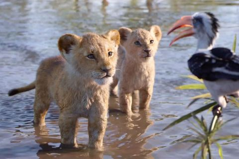the lion king early reviews disney