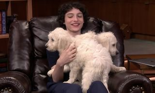Watch Finn Wolfhard Get Covered in Puppies on 'Fallon'