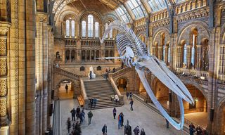 The London Museums Bucket List, as Selected by Highsnobiety's London Photographer