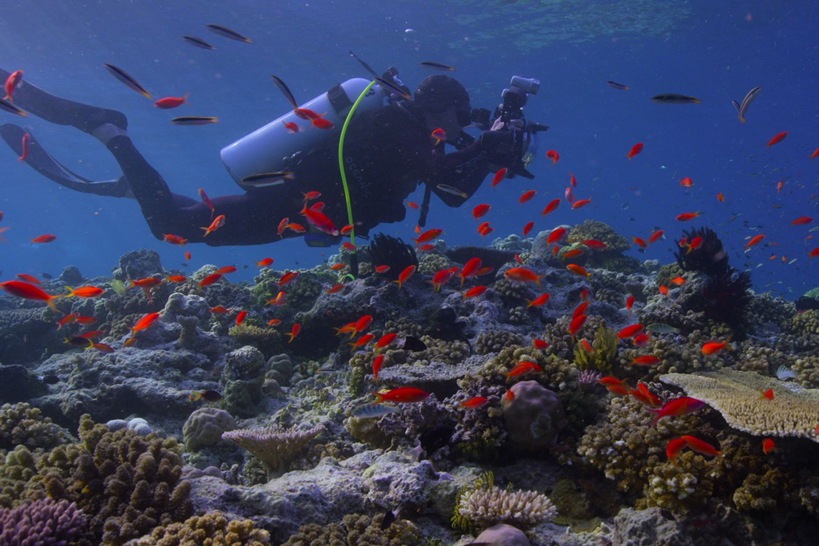 netflix documentaries life changing main Audrie & Daisy Chasing Coral Cowspiracy: The Sustainability Secret