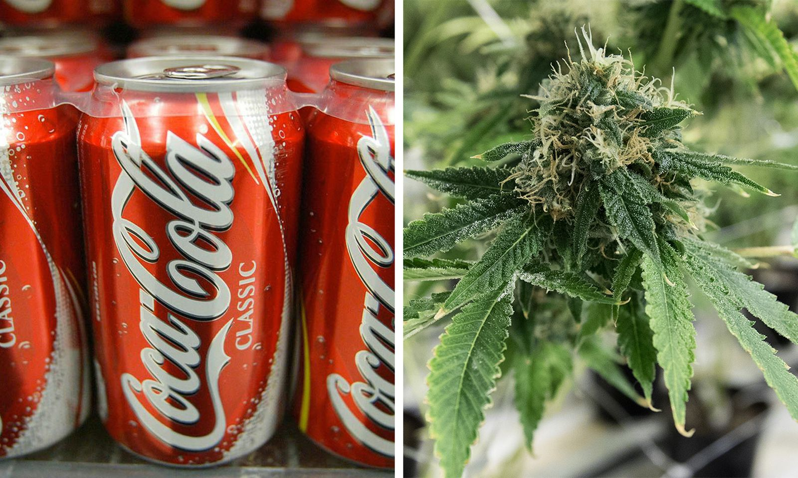coke cannabis infused drinks Aurora Cannabis coca cola marijuana