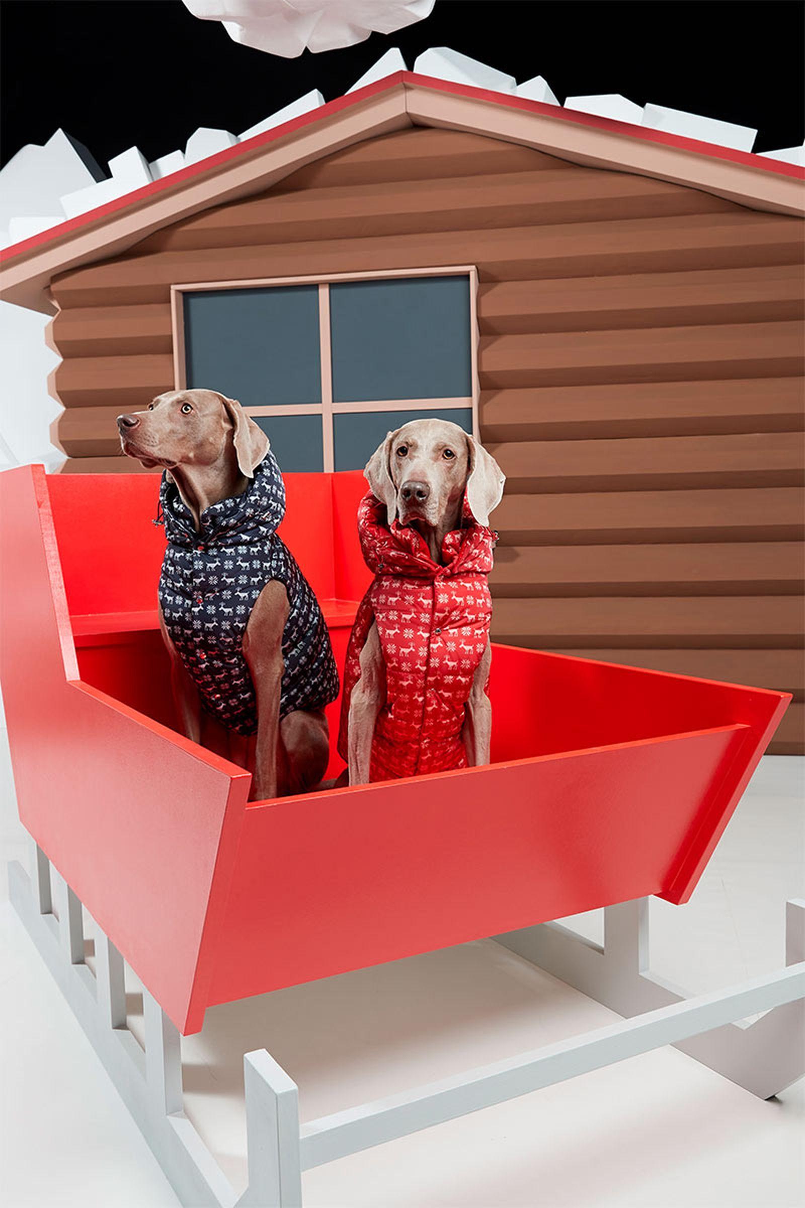 moncler-genius-poldo-dog-couture-6
