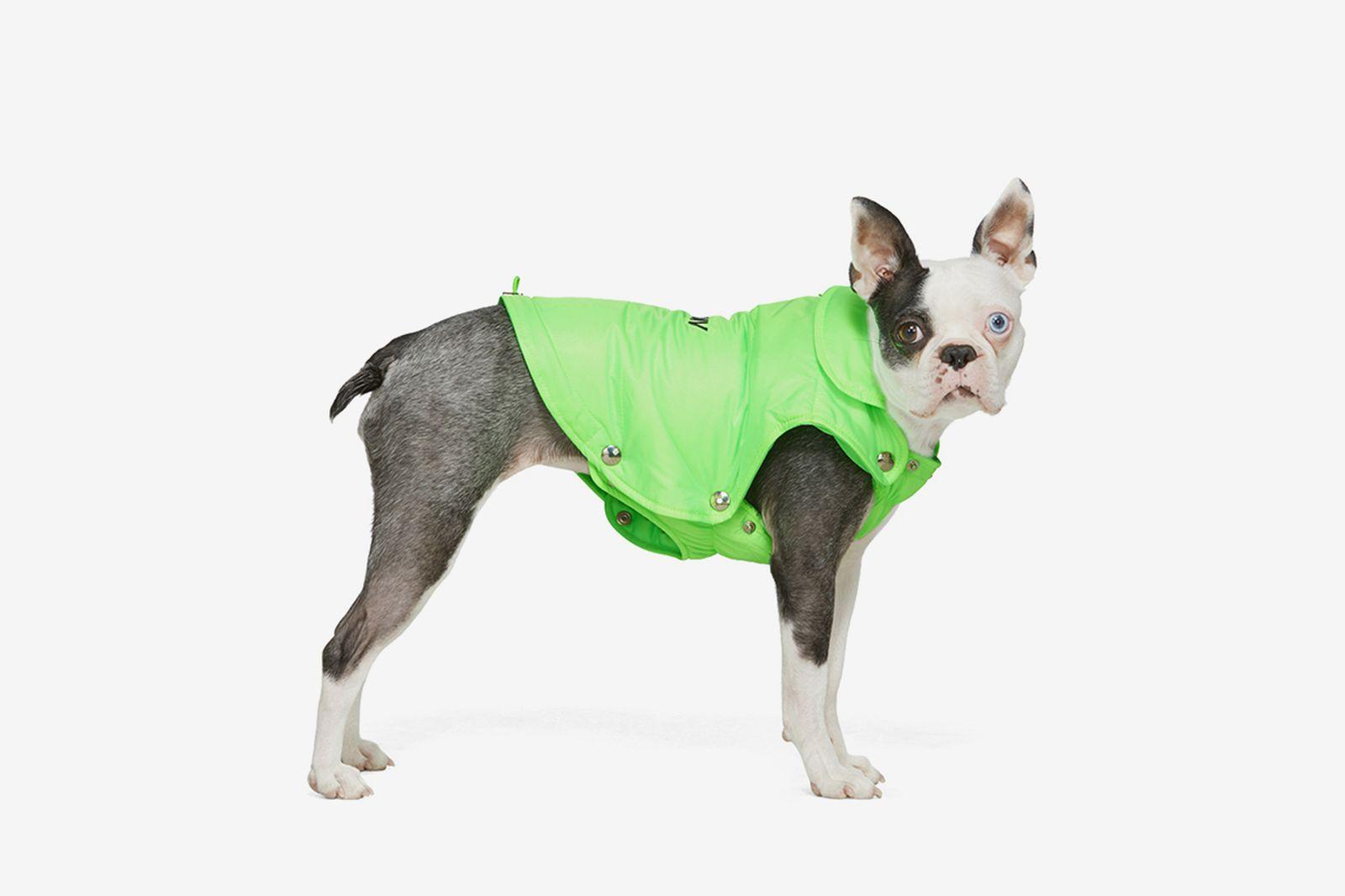 ssense-luxury-dogwear-2020-main