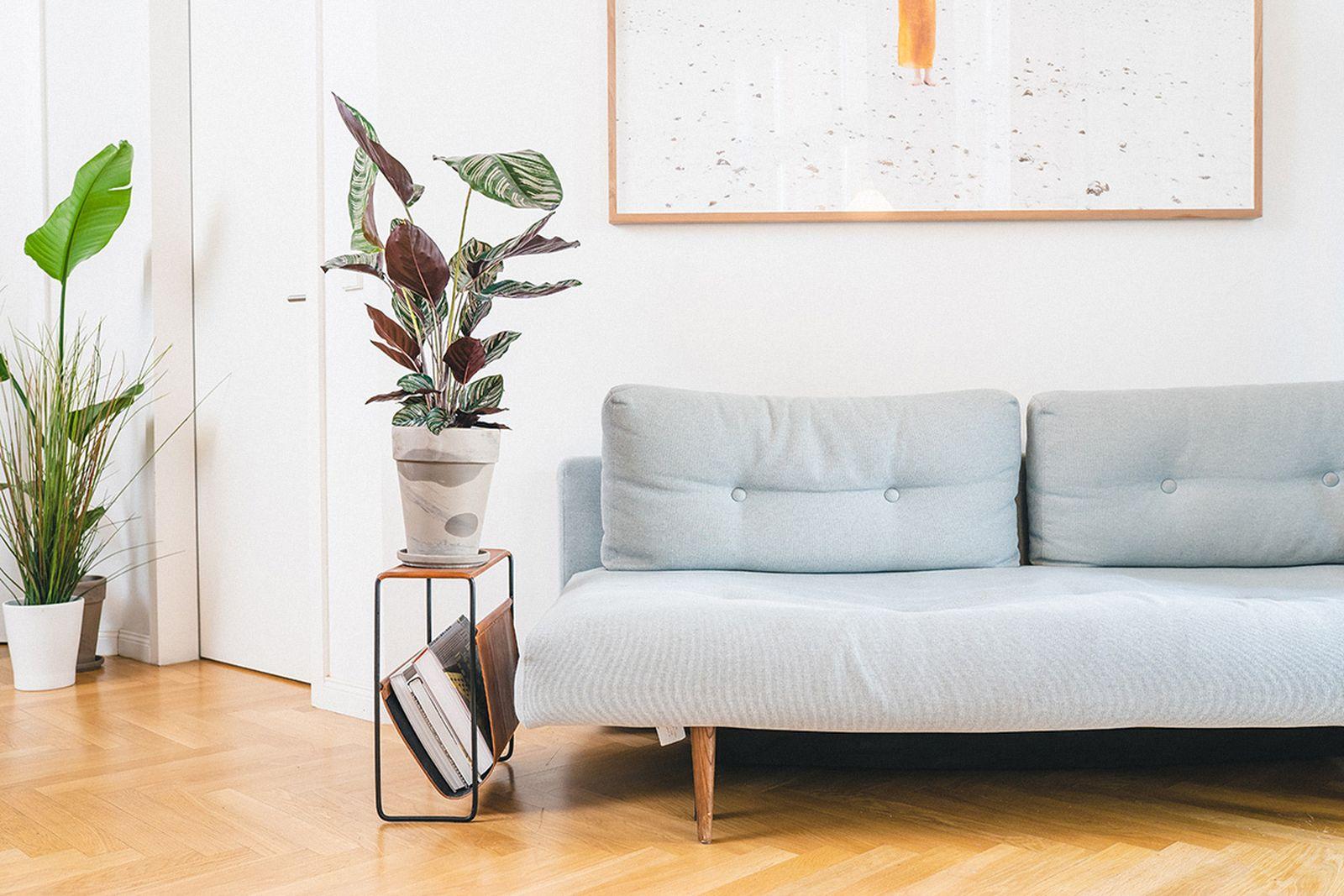 easy-house-plants-for-beginners-09