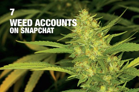 Weed Snapchat Accounts: Here Are the 7 Best to Follow