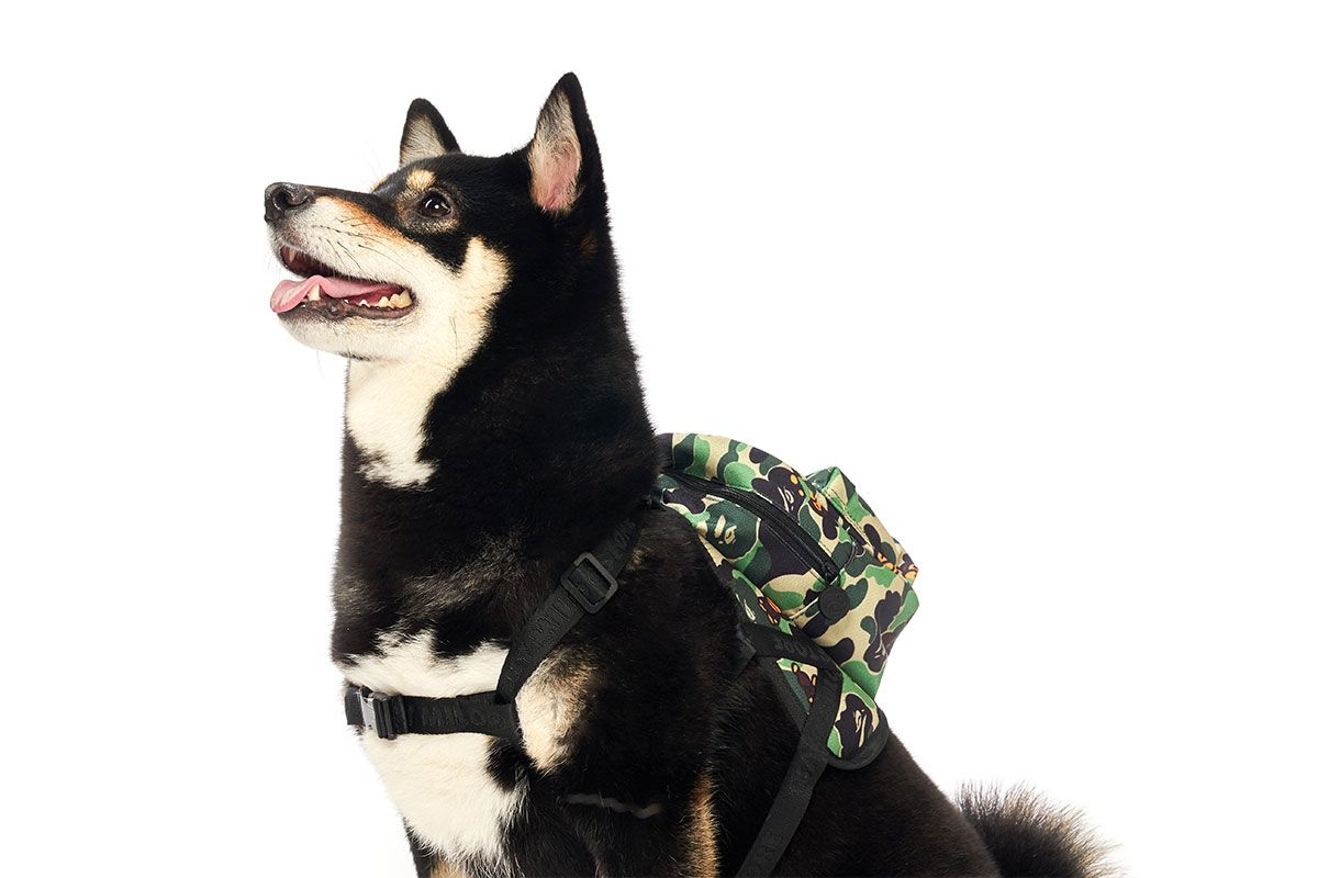 Baby Milo's Pet Collection Has the Steeziest Accessories for Man's Best Friend