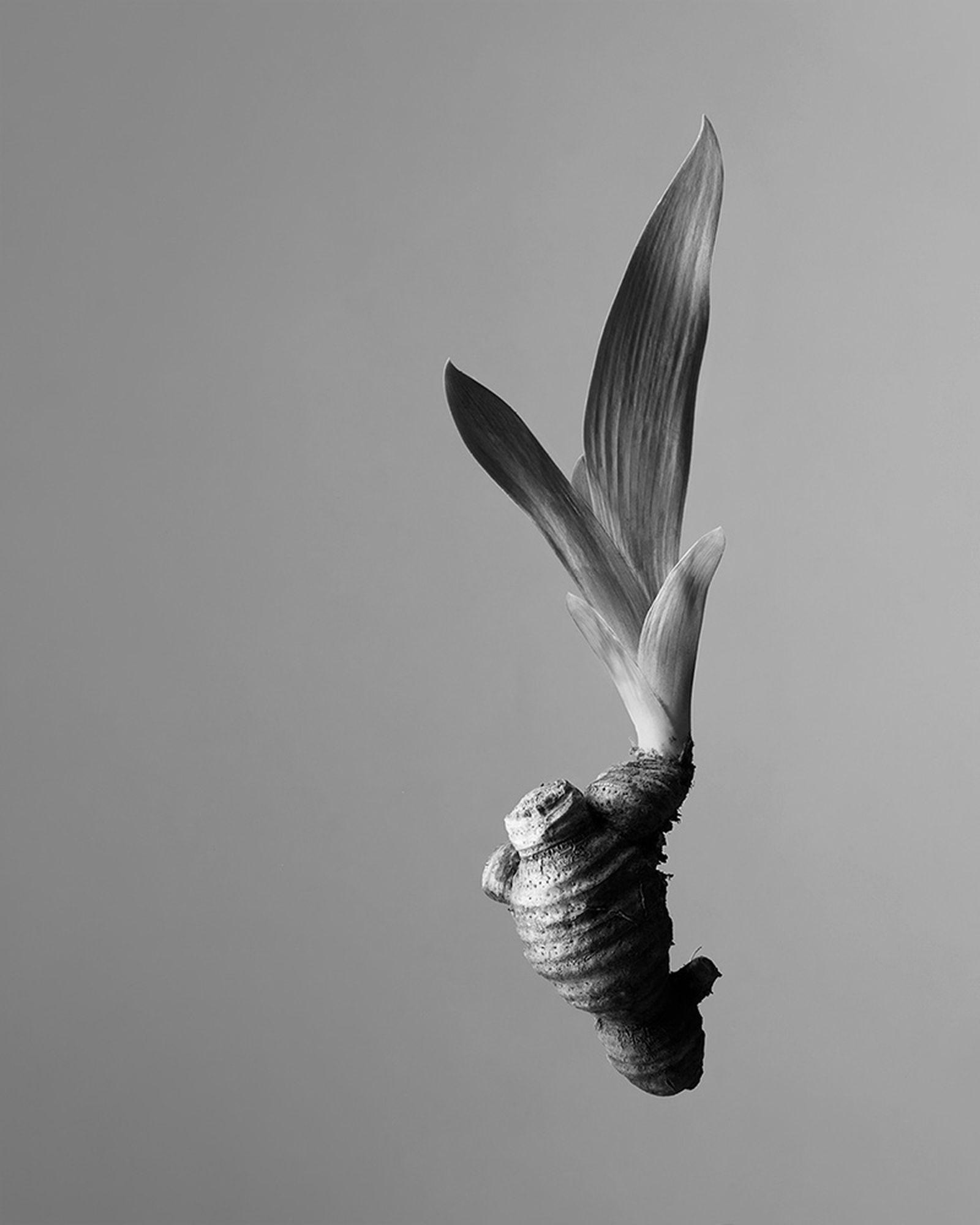 aesop-othertopias-fragrance-collection-06