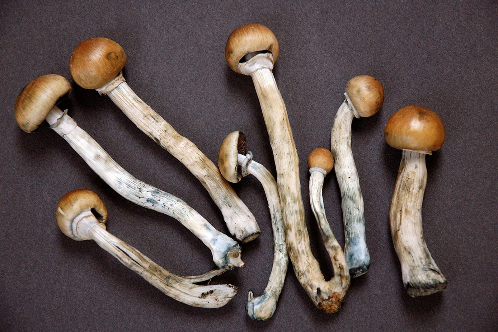 guide to microdosing Alfred Hofmann lsd