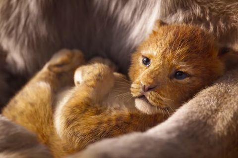 The Lion King Trailer The Internets Reaction Is Priceless