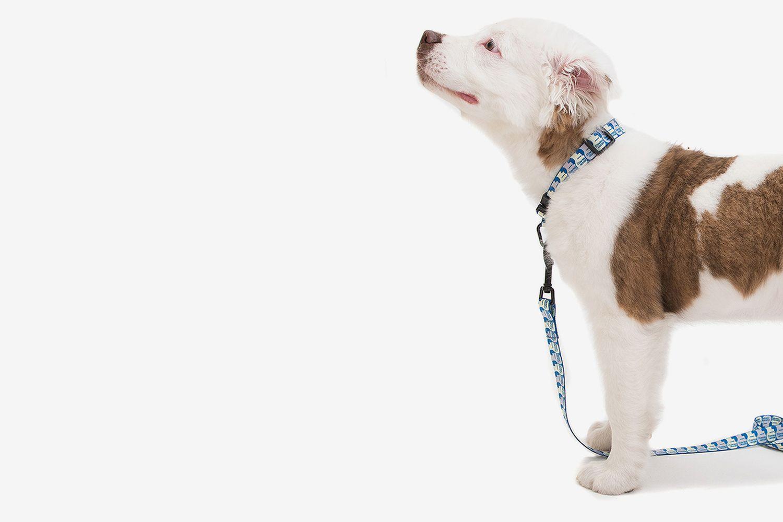 Dog Logo Leash