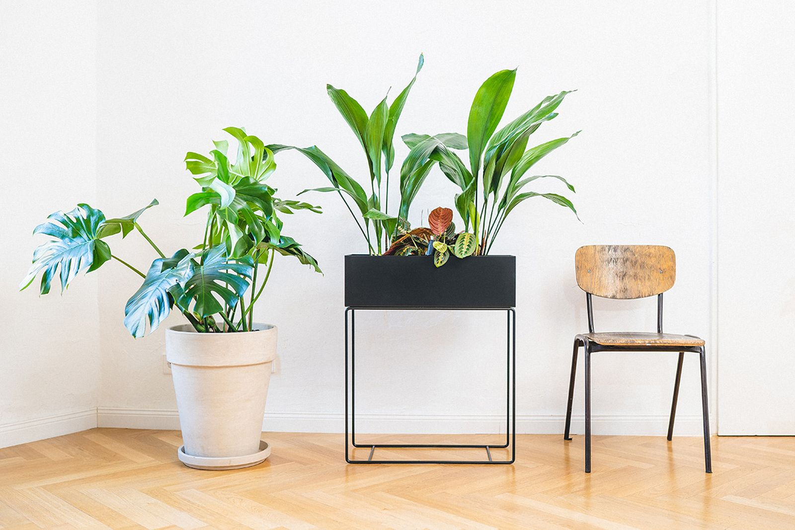 easy-house-plants-for-beginners-main