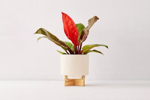 """Cecily 6"""" Planter + Stand"""
