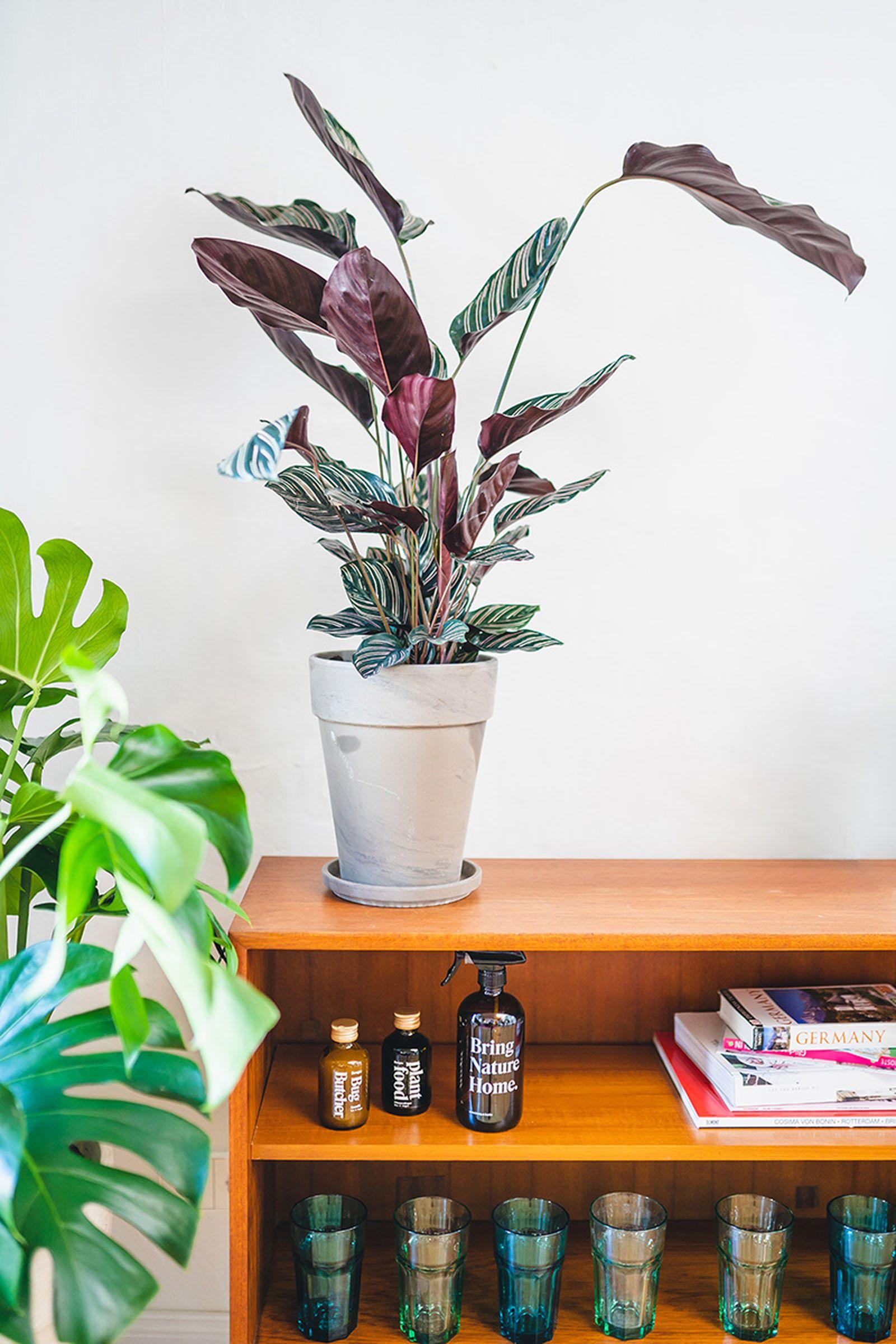 easy-house-plants-for-beginners-08