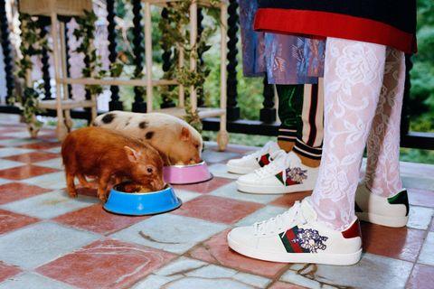 gucci chinese new year 001 Adidas Louis Vuitton air jordan 12