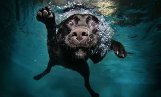 Dogs in the Swimming Pool Photo Series