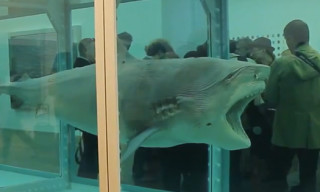 Video: Damien Hirst Retrospective at Tate Modern, London – Walkthrough with Damien Hirst