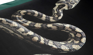 Lanvin Snake Silk Scarf