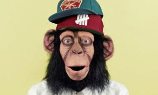 "Chimp Summer 2012 ""The Chimp Who Would be Human"" Cap Lookbook"
