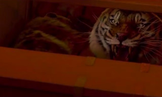 Video: Life Of Pi – Official Trailer