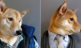 Menswear Dog – Our Favorite New Tumblr
