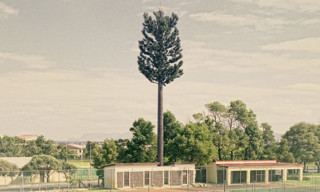 "Dillon Marsh's ""Invasive Species"" Captures Disguised Cell Phone Towers"