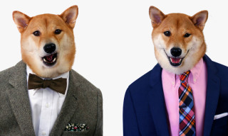 Menswear Dog for The Tie Bar
