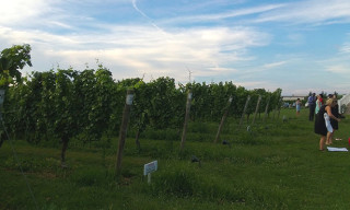 Cycling New York to a Long Island Vineyard with a Nokia Lumia 928