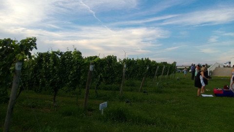 Cycling New York to a Long Island Vineyard with a Nokia Lumia 928 2