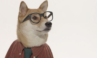 "A Short Documentary on the Origins of ""Menswear Dog"" and its Clever Creators"